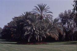 Jardin jardin olbius riquier hy res les palmiers for Jardin olbius riquier