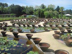 Jardin latour marliac jardin des n nuphars le temple sur lot - Jardin des nenuphars le temple sur lot ...