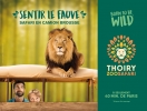 Born to be wild, Sentir le fauve, Safari en camion brousse - 2018